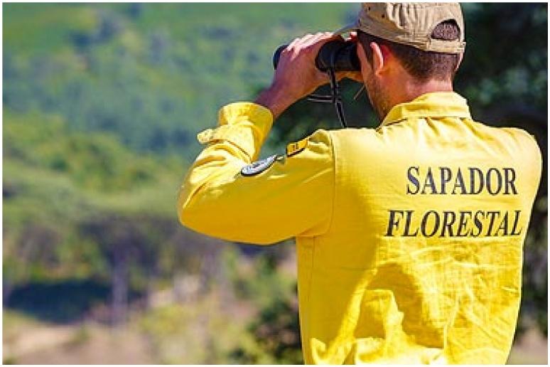 Detido sapador florestal suspeito de atear fogo em Oleiros