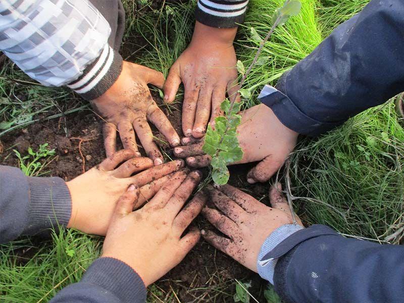 Idanha-a-Nova planta árvores autóctones dia 23 deste mês - Diário Digital Castelo Branco